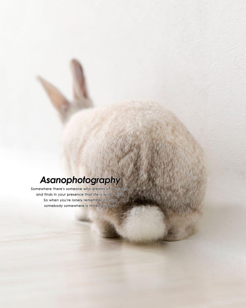 ふわふわのしっぽ。ペット写真も色々な角度から